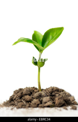 seedling - Stock Photo