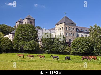 domestic horse (Equus przewalskii f. caballus), horses grazing in front of the Benedictine monastery Gerleve, Germany, - Stock Photo