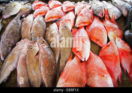 fresh fishes on fish market Sir Selwyn Selwyn Clarke, Seychelles, Mahe, Victoria - Stock Photo
