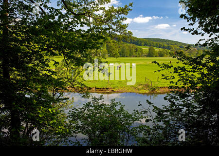 flood plain of Ruhr river with paddock, Germany, North Rhine-Westphalia, Ruhr Area, Witten - Stock Photo