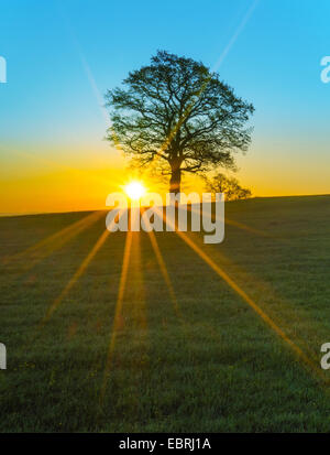 sunrays over a morning meadow, Germany, Bavaria, Oberbayern, Upper Bavaria - Stock Photo