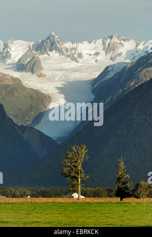 panoramic view over a meadow in front of the Southern Alps with the Fox Glacier, New Zealand, Southern Island, Westland - Stock Photo