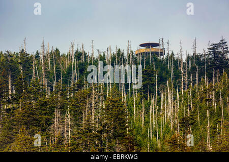 lookout tower in a conifer forest with coniferous forest, USA, Tennessee, Great Smoky Mountains National Park - Stock Photo