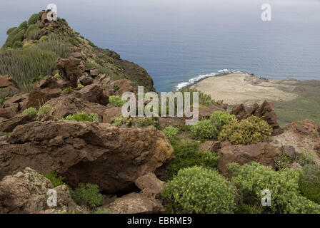 view at the Atlantic from craggy and overgrown rocks  at the west coast near Punta Gongora between Puerto de La - Stock Photo