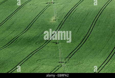Electricity power lines in a field of young wheat - Stock Photo