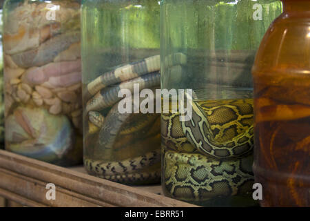 Burmese python (Python bivittatus, Python molurus bivittatus), snakes preserved in formaldehyde solution, Thailand, - Stock Photo