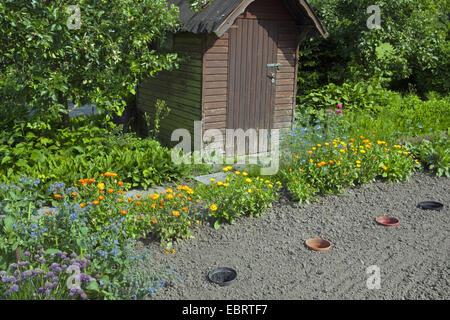 garden-pot marigold (Calendula officinalis), garden with shanty and vegetable patch, Belgium, Oudenaarde - Stock Photo