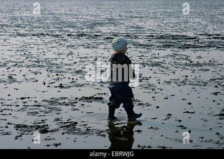 little boy walking through mud flat , Germany, Lower Saxony - Stock Photo