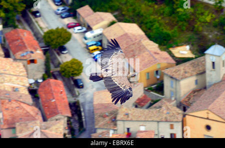 griffon vulture (Gyps fulvus), flying over village of Remuzat, France, France, Provence, Remuzat - Stock Photo