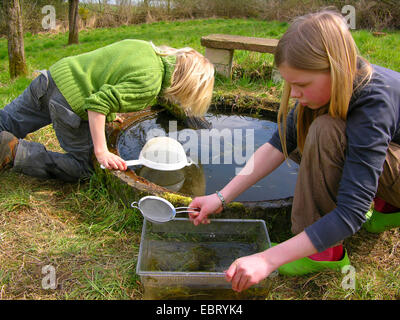 children catching water animals with cullenders in a garden pond, Germany - Stock Photo