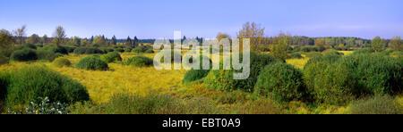 bushes in Steinley Fen, Belgium, High Fens, Muetzenich - Stock Photo