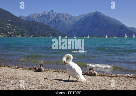 Lake Como near Domaso with Pizzo Ligoncio in the background, Italy, Lake Como - Stock Photo
