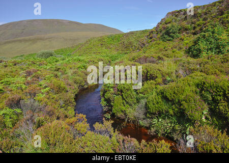 creek in moor, United Kingdom, Scotland, Orkney, Hoy - Stock Photo