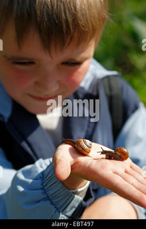 orchard snail, copse snail (Arianta arbustorum), two snails creeping on the hand of a little boy - Stock Photo