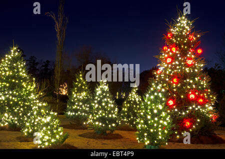 outdoor christmas trees have been decorated with red and white lights and shot against a brilliant - Outdoor Christmas Tree Lights