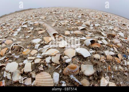 seashells on the beach, Germany - Stock Photo