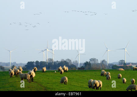 flock of sheep, wind wheels in the background and wild geese in the sky, Germany, Lower Saxony - Stock Photo