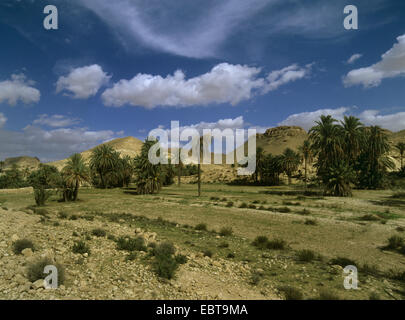 oasis with palmtrees in front of Atlas Mountains, Tunisia - Stock Photo