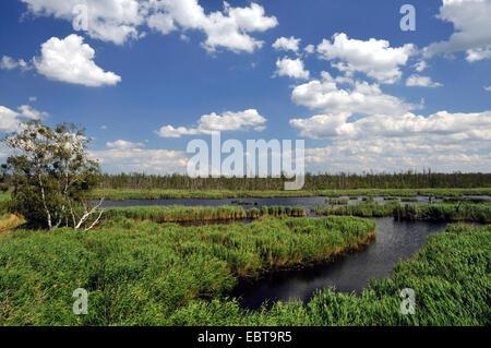 Peene river flood plain, Germany, Mecklenburg-Western Pomerania, Anklam - Stock Photo