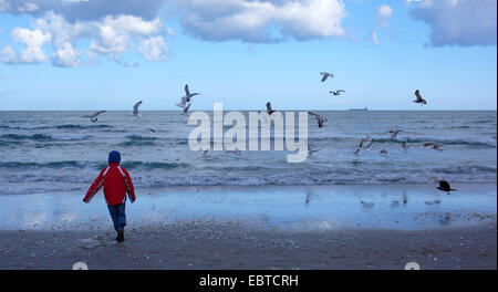 little boy walking on a sand beach in front of the surf over which sea birds are flying looking for food, Germany, - Stock Photo