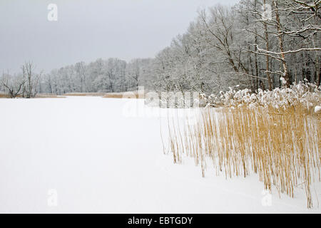 view over a lake frozen over and snowbound, Germany, Saxony, Oberlausitz - Stock Photo