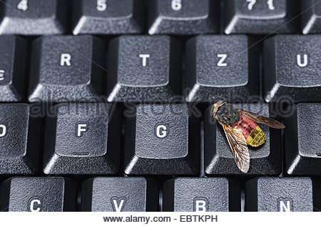 fly in the German national colours sitting on a computer keyboard symbolising spyware from the government - Stock Photo