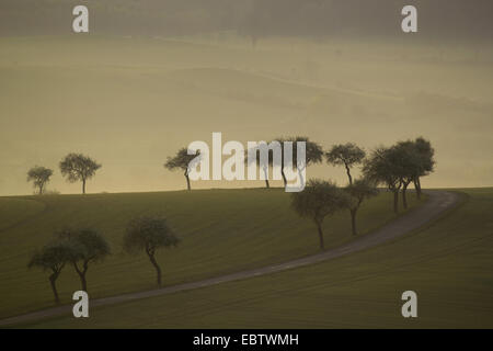 field path flanked by single trees leading through meadows in clearing morning mist, Germany, Saxony, Vogtland - Stock Photo