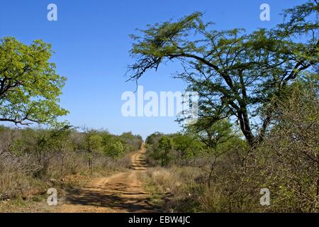 Hlane Royal Nationalpark, Swaziland, Hlane Royal National Park - Stock Photo
