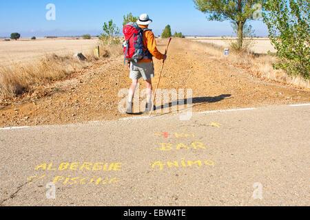 pilgrim on the Way of St James between Carri�n de los Condes and Calzadilla de la Cueza, Spain, Kastilien & - Stock Photo