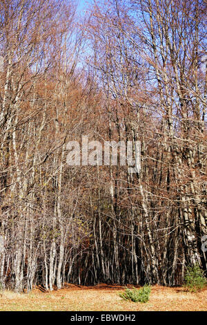 Wild Forest Path in Autumn in Europe Country - Stock Photo