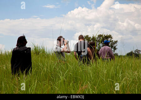 tourist group walking through high grass in the National Parc de la Ruvubu in the East of the country, Burundi, - Stock Photo