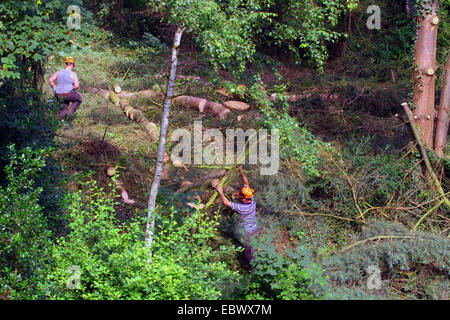 lumberjacks felling trees, Germany - Stock Photo