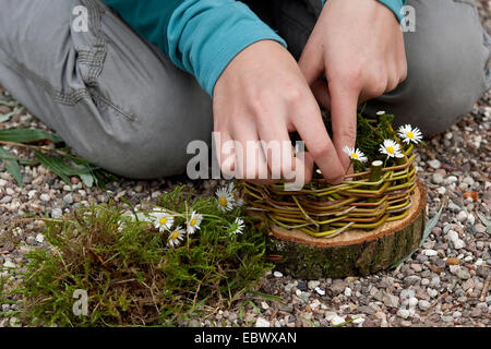girl building an Easter basket from a tree disc, willow twigs, moss, daisies and coloured eggs; 5. step: adorning - Stock Photo