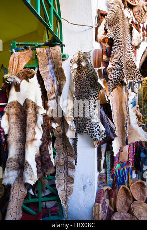 shop in the Medina (old town) offering different animal's skins and furs, Libya, Tripolis - Stock Photo