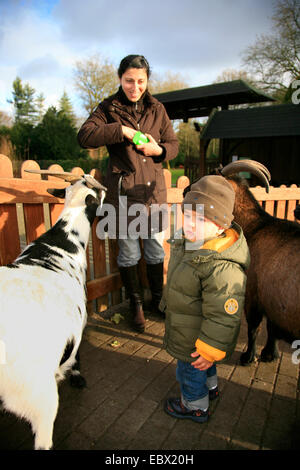 mother and little feeding goats in a petting zoo - Stock Photo