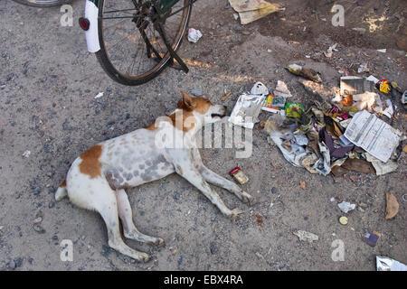 dog sleeping in the street beside garbage, India, Andaman Islands - Stock Photo