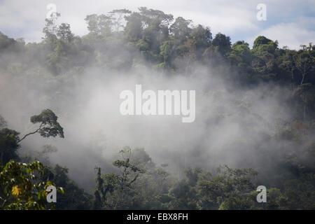 cloud forest, Peru, Manu National Park, Pilcopata - Stock Photo