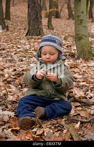 little boy sitting in forest and playing with chestnuts, Germany - Stock Photo