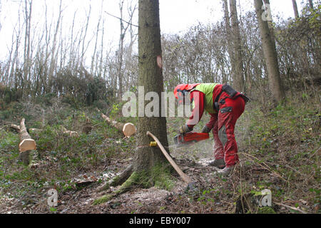 lumberjack working in the forest - Stock Photo