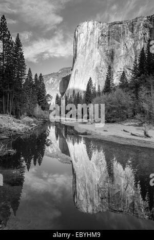 El Capitan reflected in the River Merced, Yosemite Valley, California, USA. Autumn (October) 2014. - Stock Photo