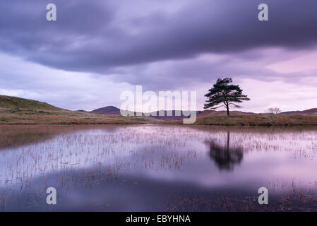 Kelly Hall Tarn at twilight, Lake District, Cumbria, England. Autumn (November) 2014. - Stock Photo