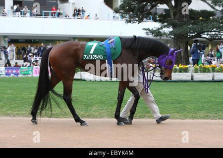 Kyoto, Japan. 30th Nov, 2014. Am Ball Bleiben Horse Racing : Am Ball Bleiben is led through the paddock before the - Stock Photo