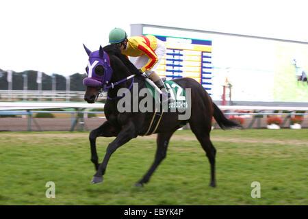 Kyoto, Japan. 30th Nov, 2014. Sakajiro Royal (Yusaku Kokubun) Horse Racing : Sakajiro Royal ridden by Yusaku Kokubun - Stock Photo