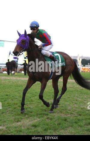 Kyoto, Japan. 30th Nov, 2014. Am Ball Bleiben (Ken Tanaka) Horse Racing : Am Ball Bleiben ridden by Ken Tanaka before - Stock Photo