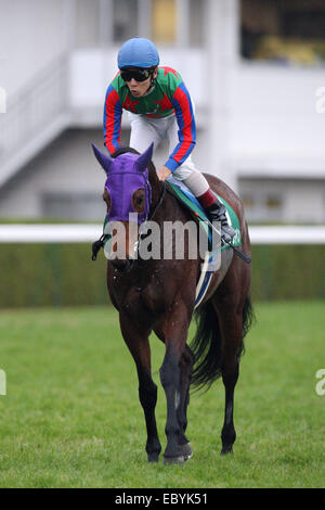 Kyoto, Japan. 30th Nov, 2014. Am Ball Bleiben (Ken Tanaka) Horse Racing : Am Ball Bleiben ridden by Ken Tanaka after - Stock Photo