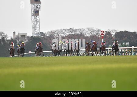 Tokyo, Japan. 30th Nov, 2014. Epiphaneia (Christophe Soumillon) Horse Racing : Epiphaneia ridden by Christophe Soumillon - Stock Photo