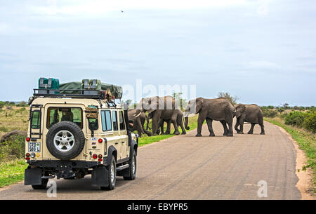 KRUGER NATIONAL PARK, SOUTH AFRICA: Visitors in a land-rover on safari in Africa are watching a herd of wild elephants - Stock Photo
