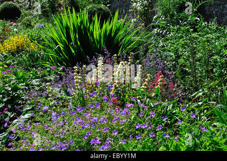 A Dorset cottage garden herbaceous border UK - Stock Photo