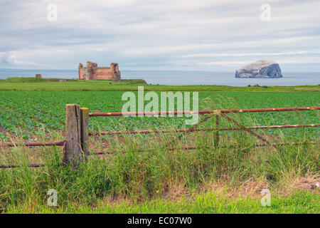 Tantallon Castle and the Bass Rock, viewed from an old farm gate and fields, North Berwick, East Lothian, Scotland. - Stock Photo