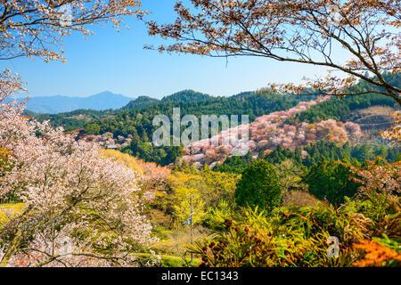 Yoshinoyama, Nara, Japan spring landscape. - Stock Photo